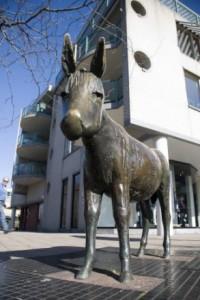 De ezel die zijn oorsprong zoekt
